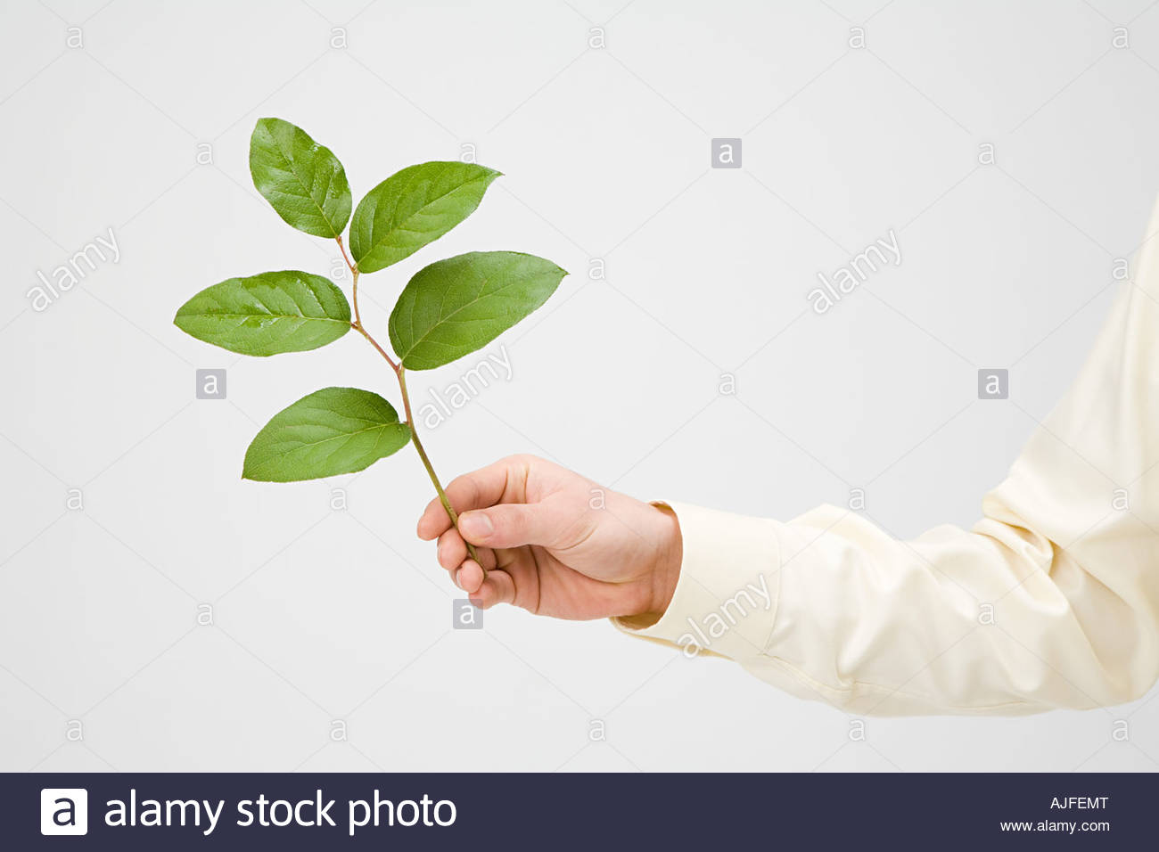 Person holding a branch - Stock Image