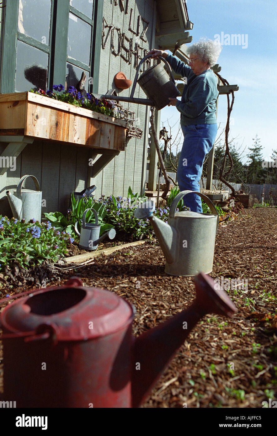 Senior woman watering flowers with watering can - Stock Image