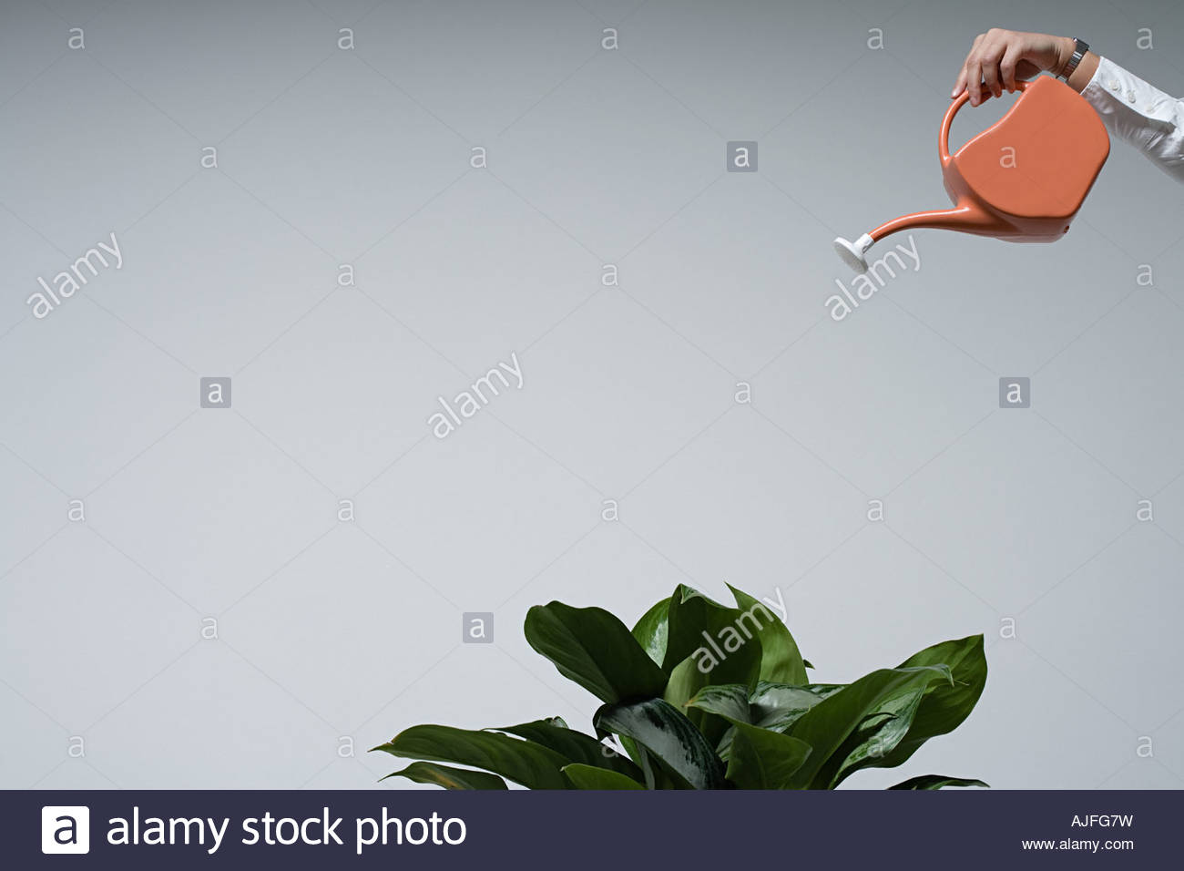 A person watering a plant - Stock Image