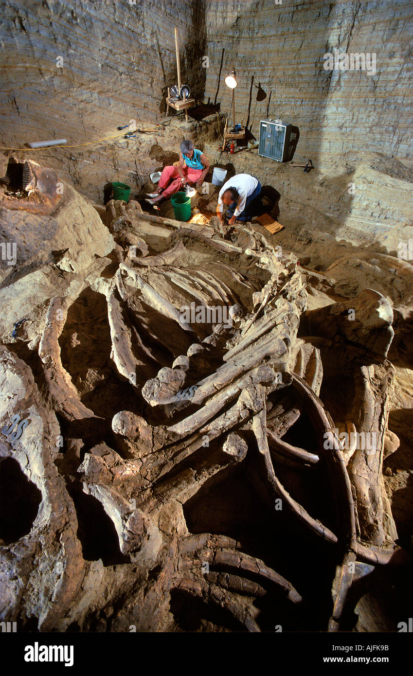 Paleontologists Excavating the Remains of a Columbian Mammoth The Mammoth Site South Dakota - Stock Image