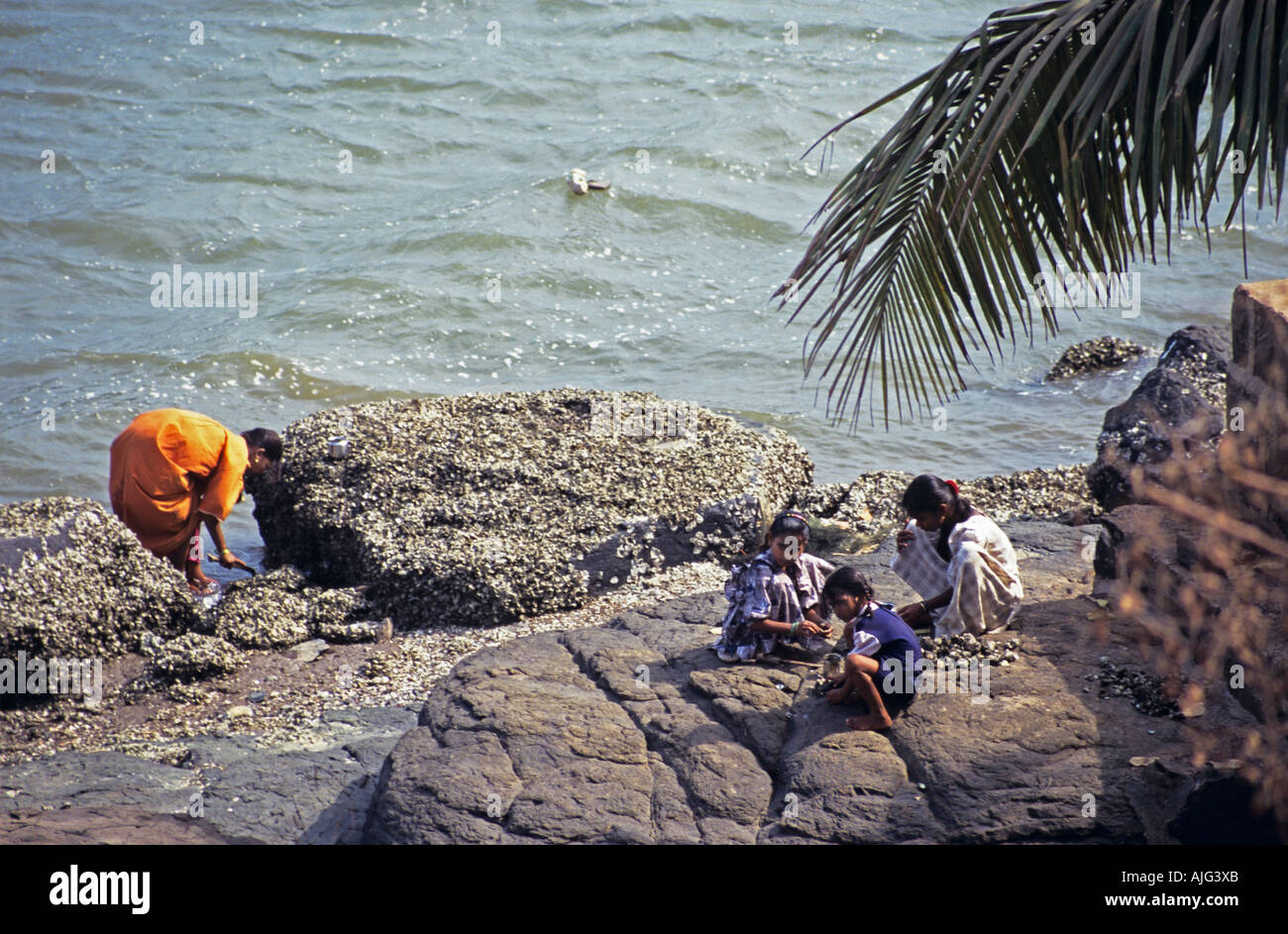 Indian family collecting cockles from rocky beach by sea, near Dabhol, India - Stock Image