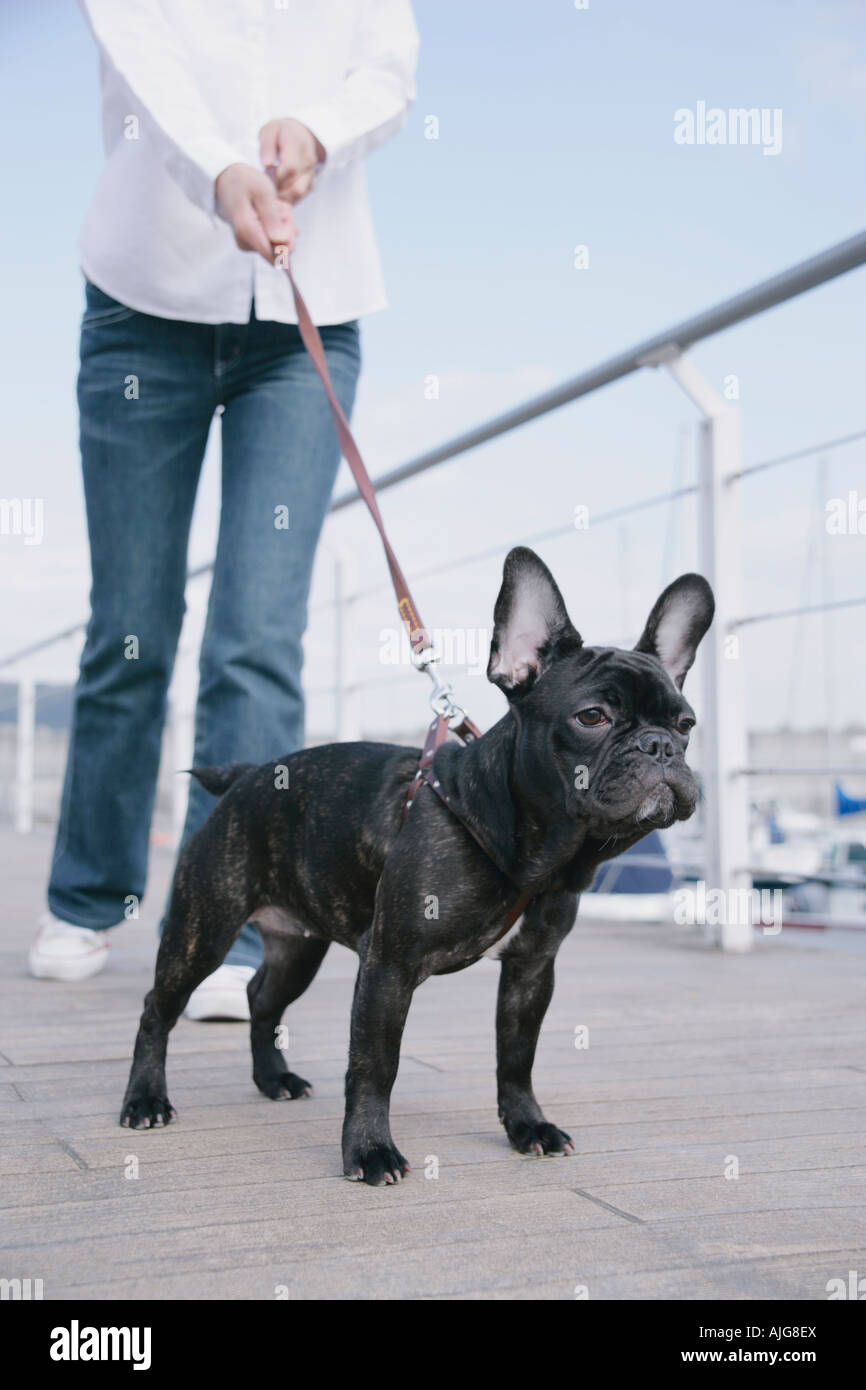 Young woman and French Bulldog - Stock Image