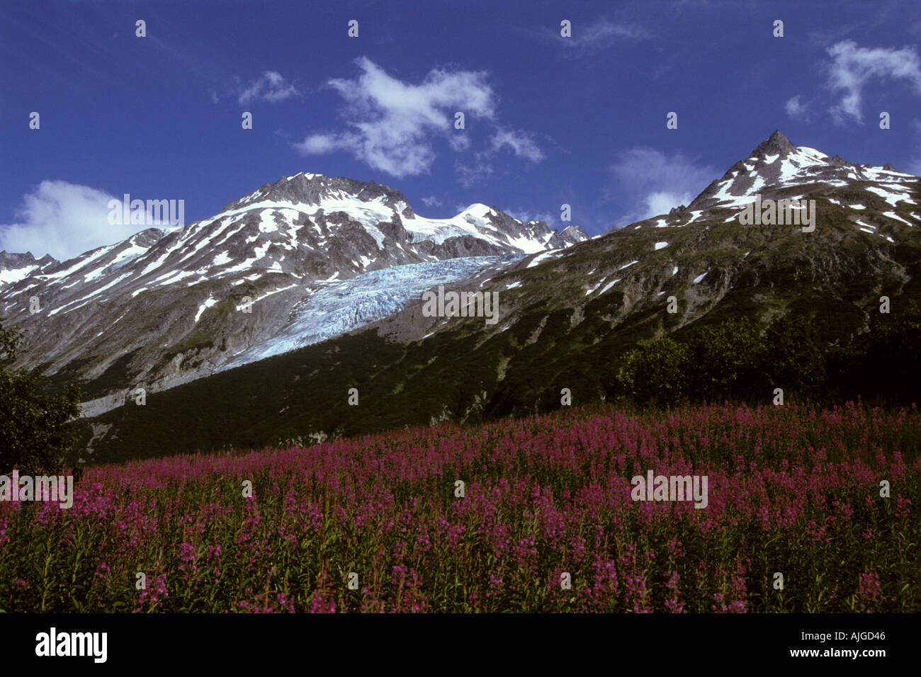 Chigmit Mountains Aleutian Range unnamed glacier at Lake Clark Pass with fireweed Lake Clark National Park Alaska - Stock Image