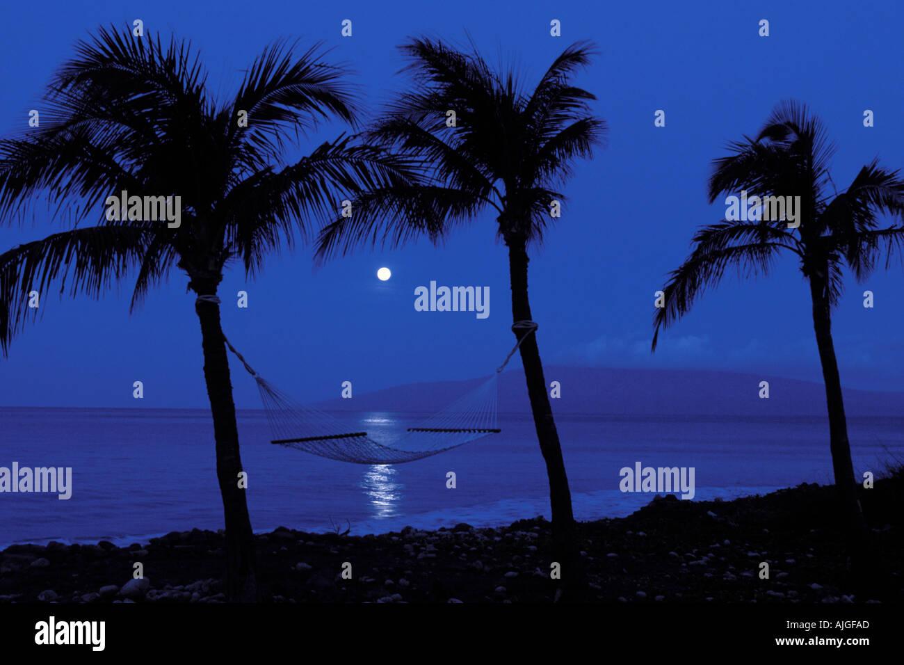 hivatalos beszállító legolcsóbb a legolcsóbb Full moon sets framed by palm trees and a hammock on the West side ...