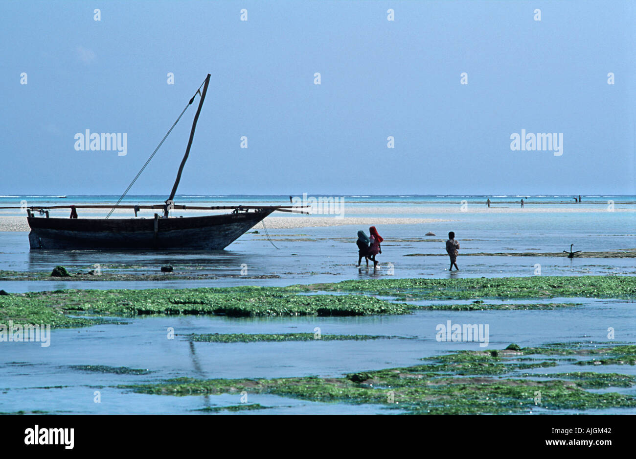 Local villagers flock out at low tide to collect seashells and seaweed Anchored dhow Nungwi Unguja Zanzibar Tanzania E Africa - Stock Image