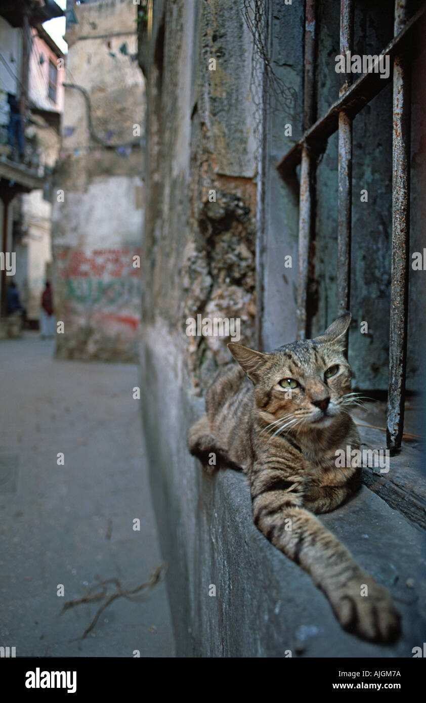 Domesticated cat comfortably perched on the window sill outside a house in old Stone Town Zanzibar Tanzania East Africa - Stock Image