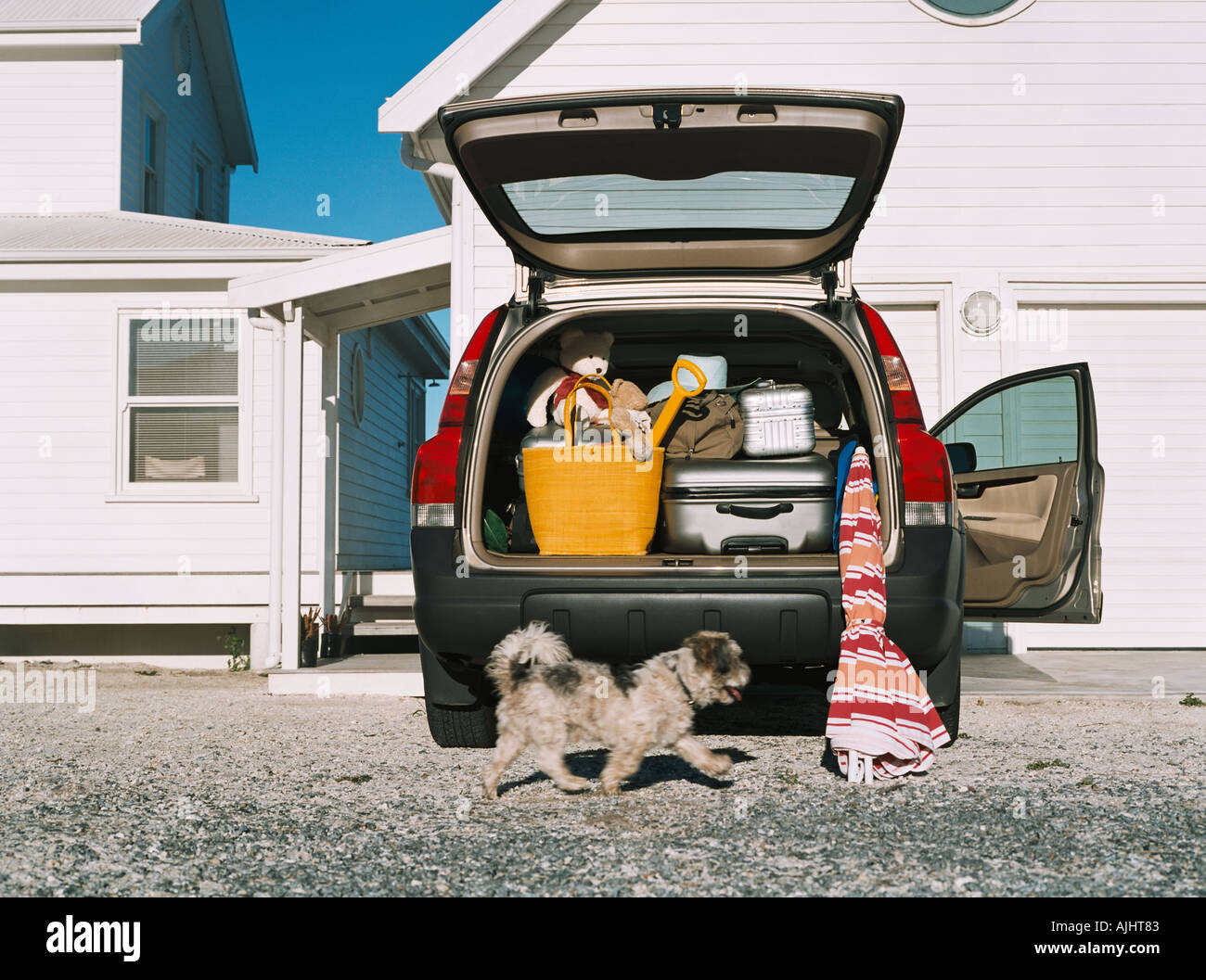 Dog by car full of luggage - Stock Image