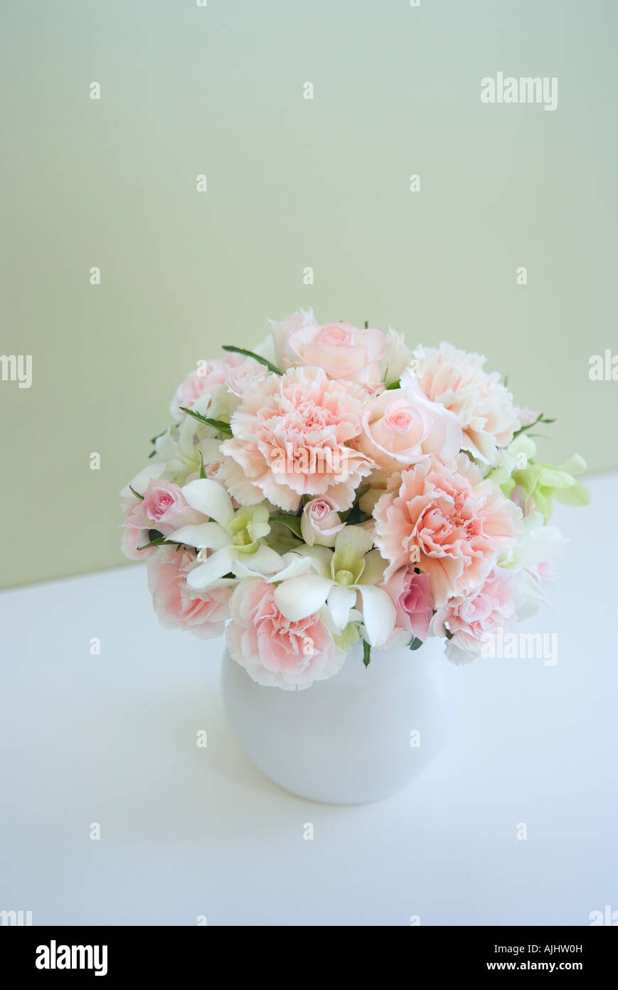 Flower Carnations Stock Photos Images