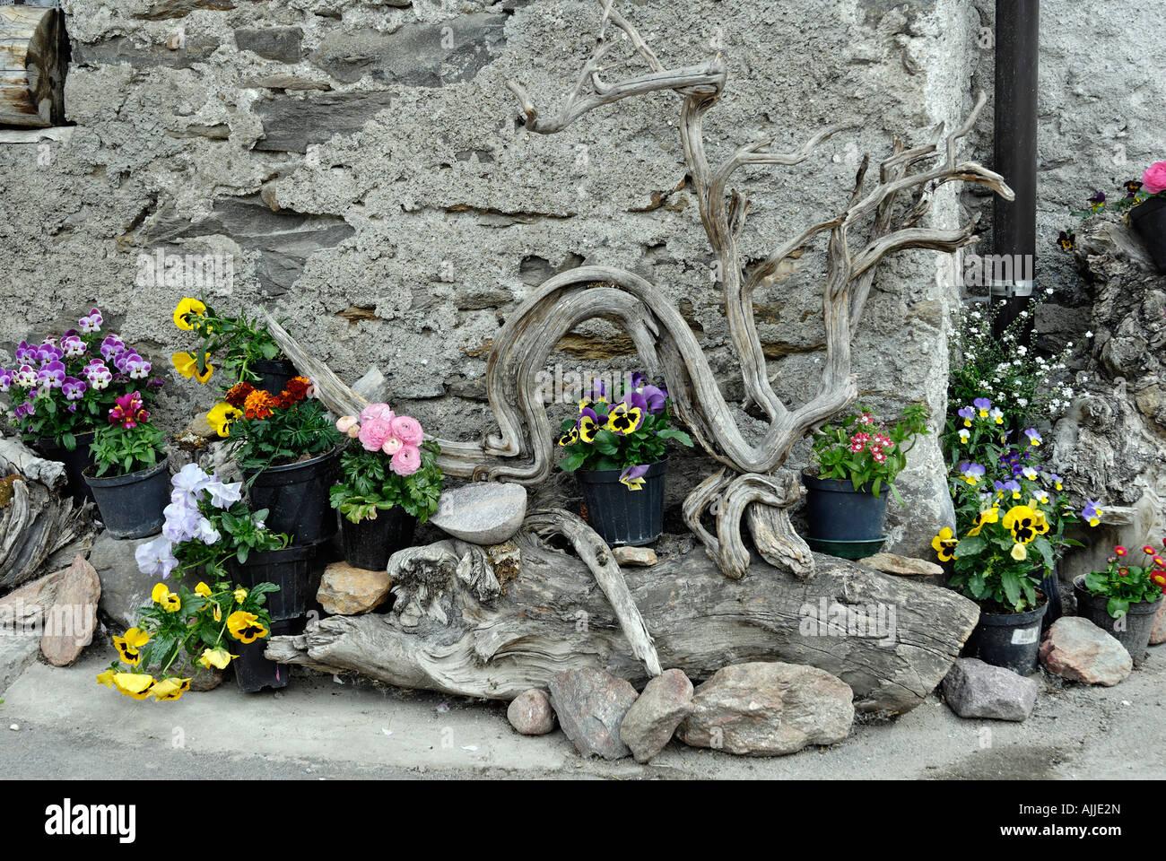 Steingarten Pflanze Stock Photos Steingarten Pflanze Stock Images