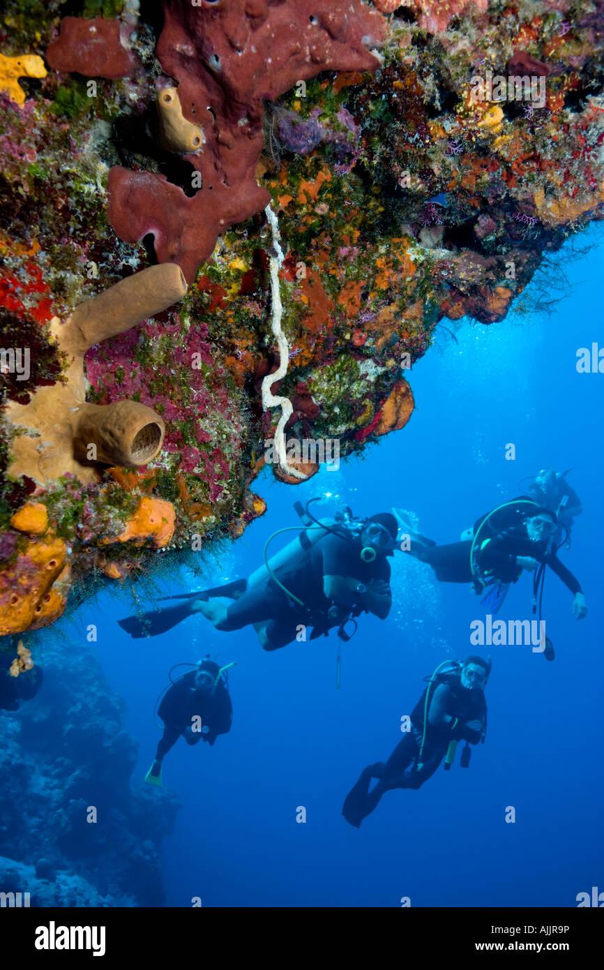 Scuba divers at Santa Rosa Wall divesite, Cozumel, Mexico - Stock Image