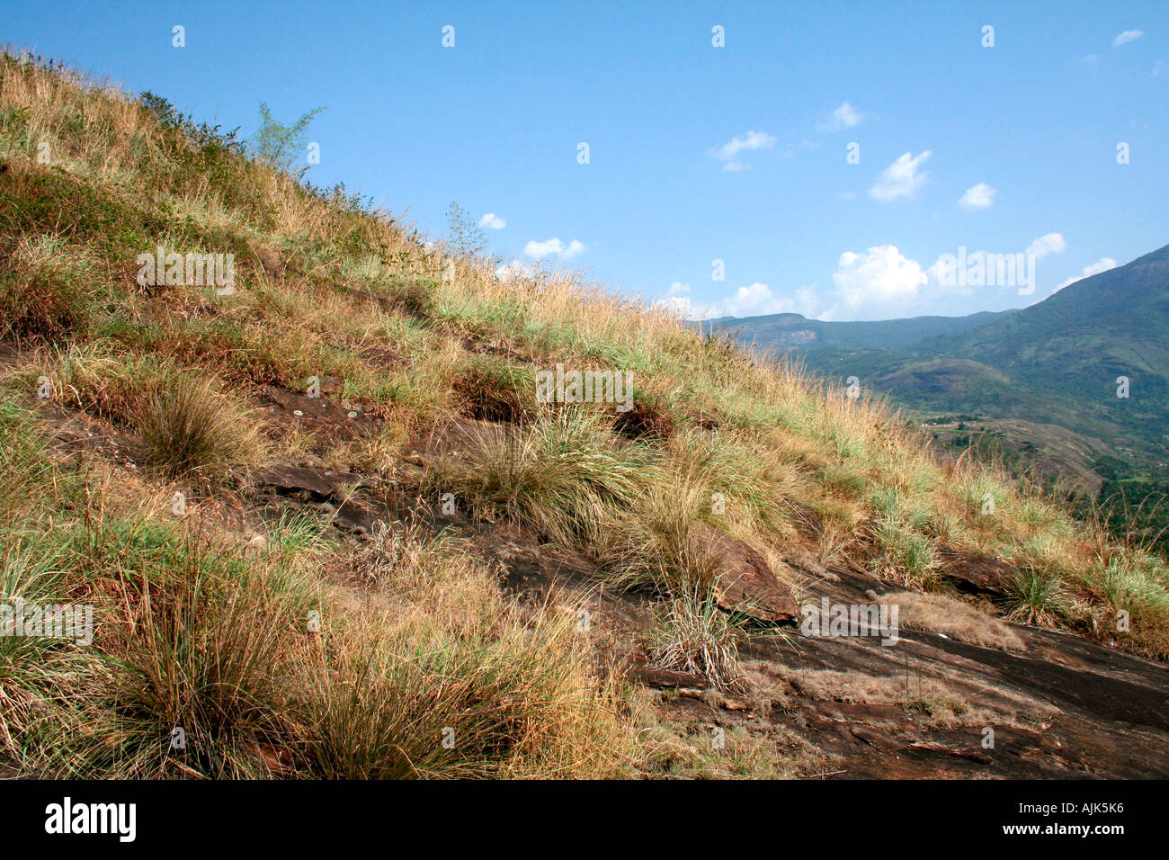 The dry grass on the slope of a hill, Marayoor, Kerala, India - Stock Image