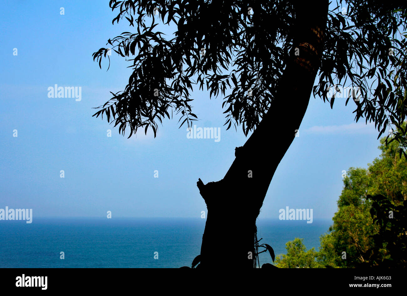 The silhouette image of a tree with the blue ocean as backdrop - Stock Image