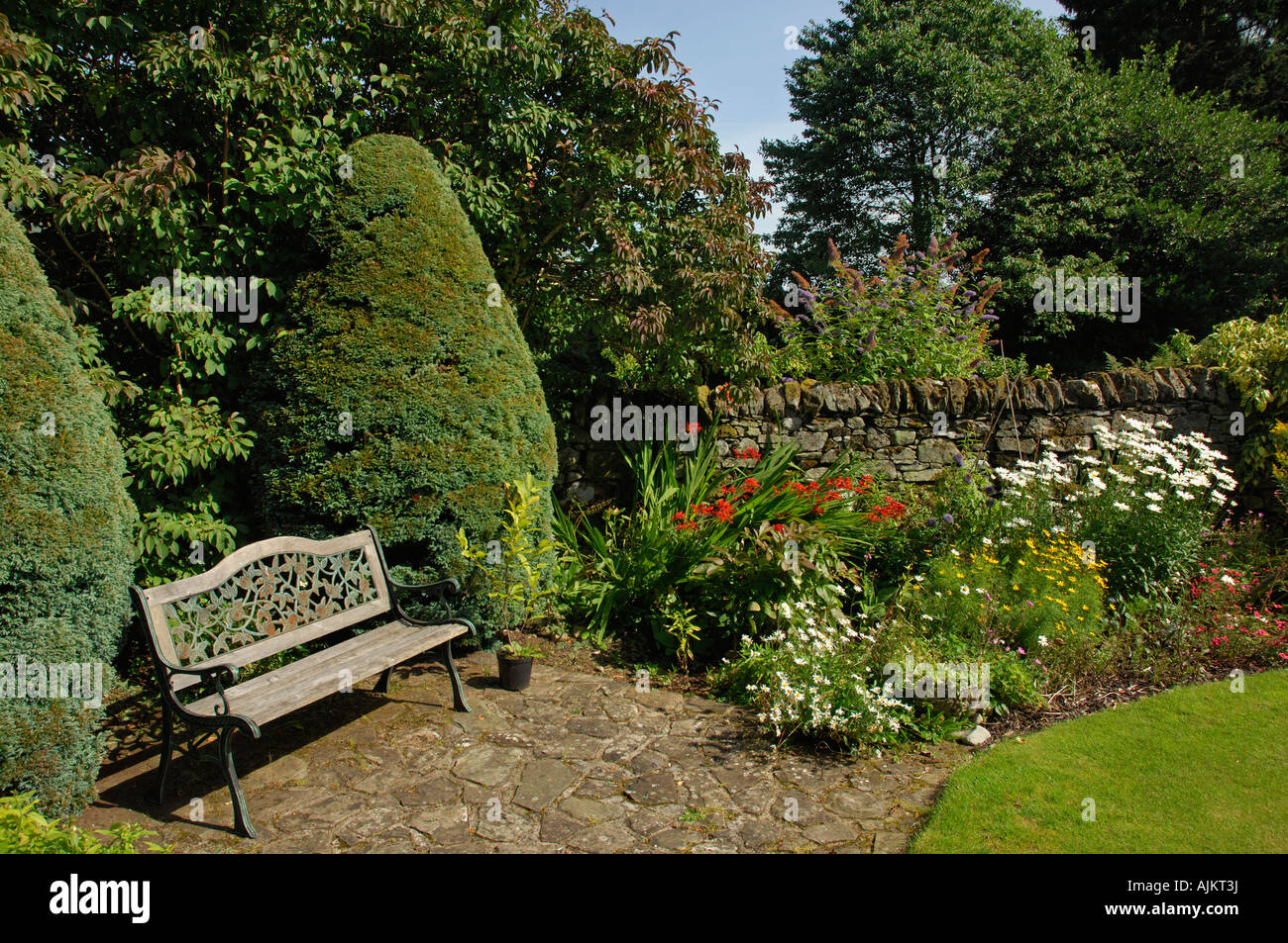 Formal corner of a Scottish garden with blue cypress trees and a ...