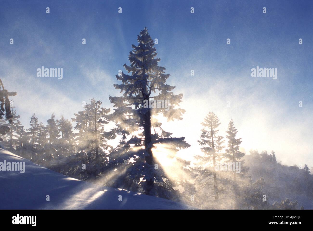 Sun shining through blowing snow at Diamond Peak NV - Stock Image