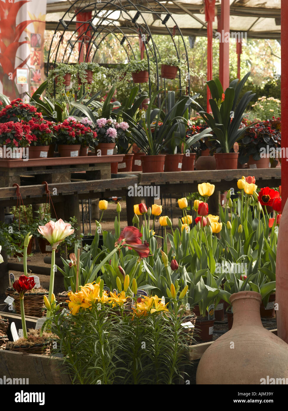 Different plants at a gardening store Stock Photo: 14765414 - Alamy