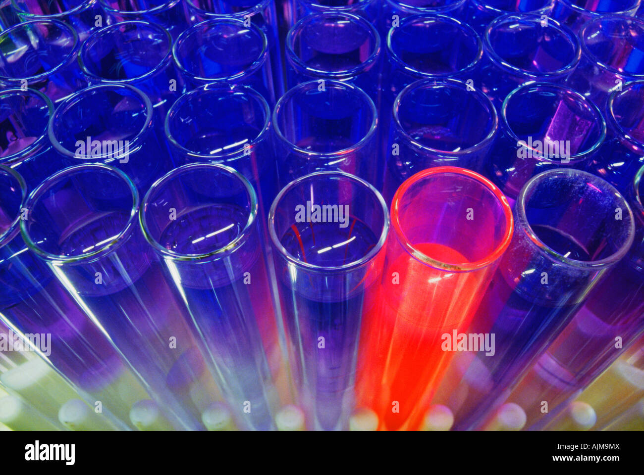 Test tubes in a test tube rack - Stock Image