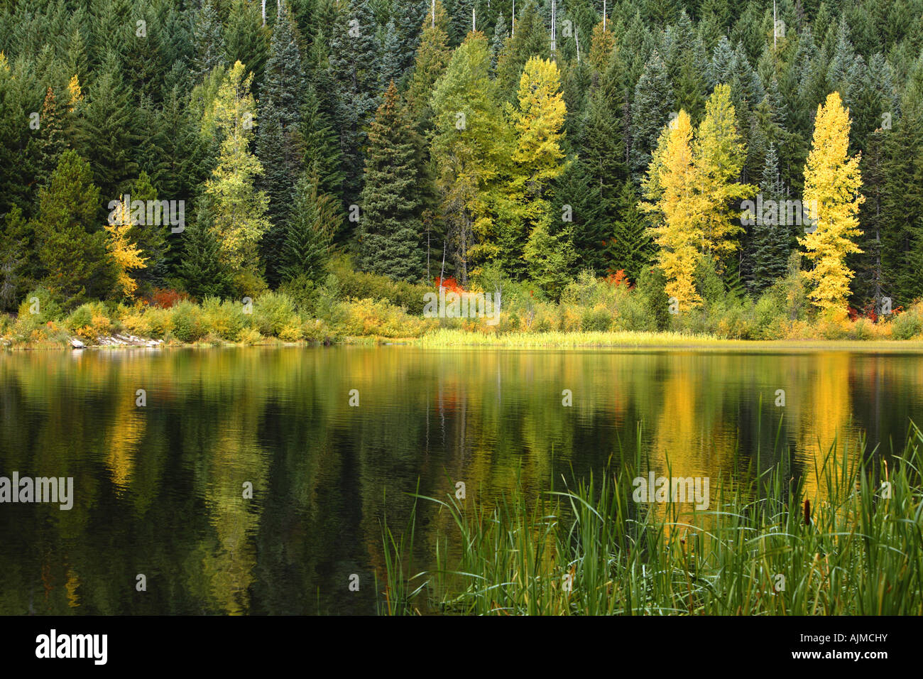 Fall colored trees reflected in lake - Stock Image