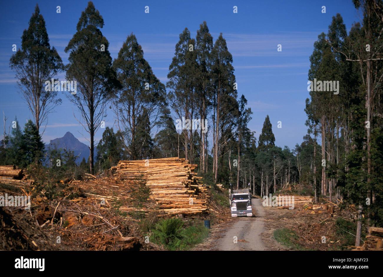 Timber industry, Tasmania, Australia - Stock Image