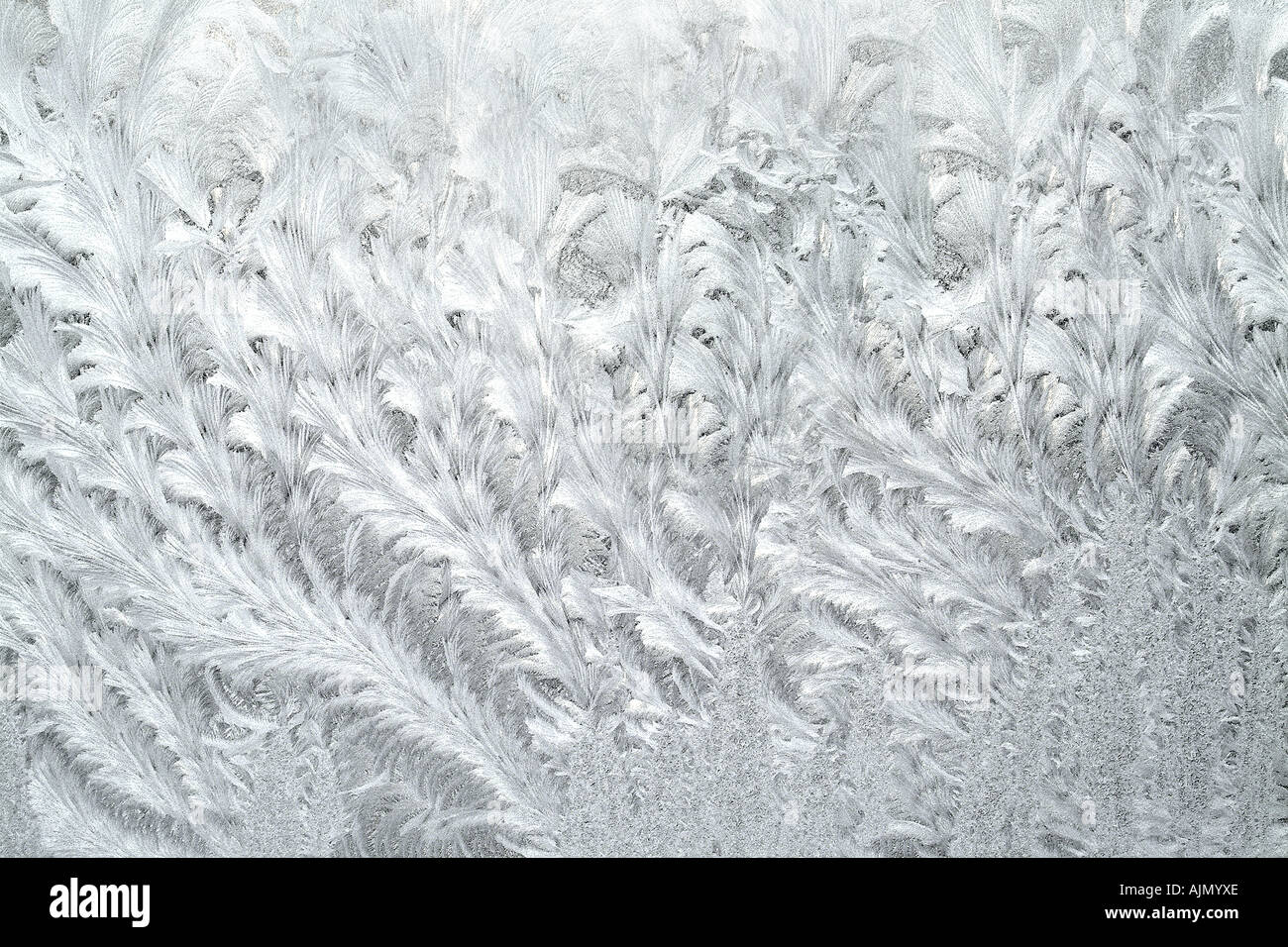 Frost Pattern Detail On Window - Stock Image