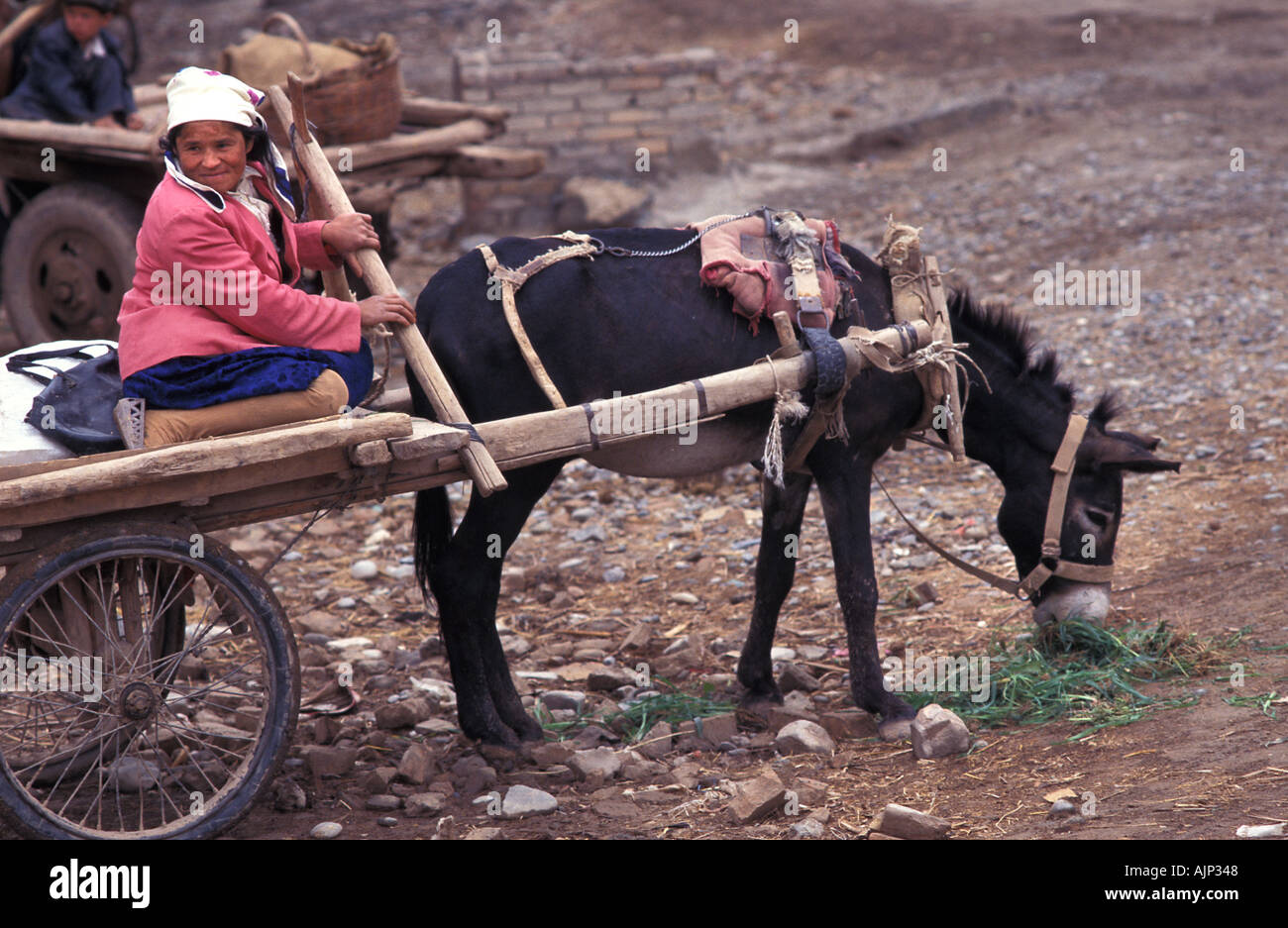 Uyghur woman on a donkey drawn cart Kashgar market Xinjiang China - Stock Image
