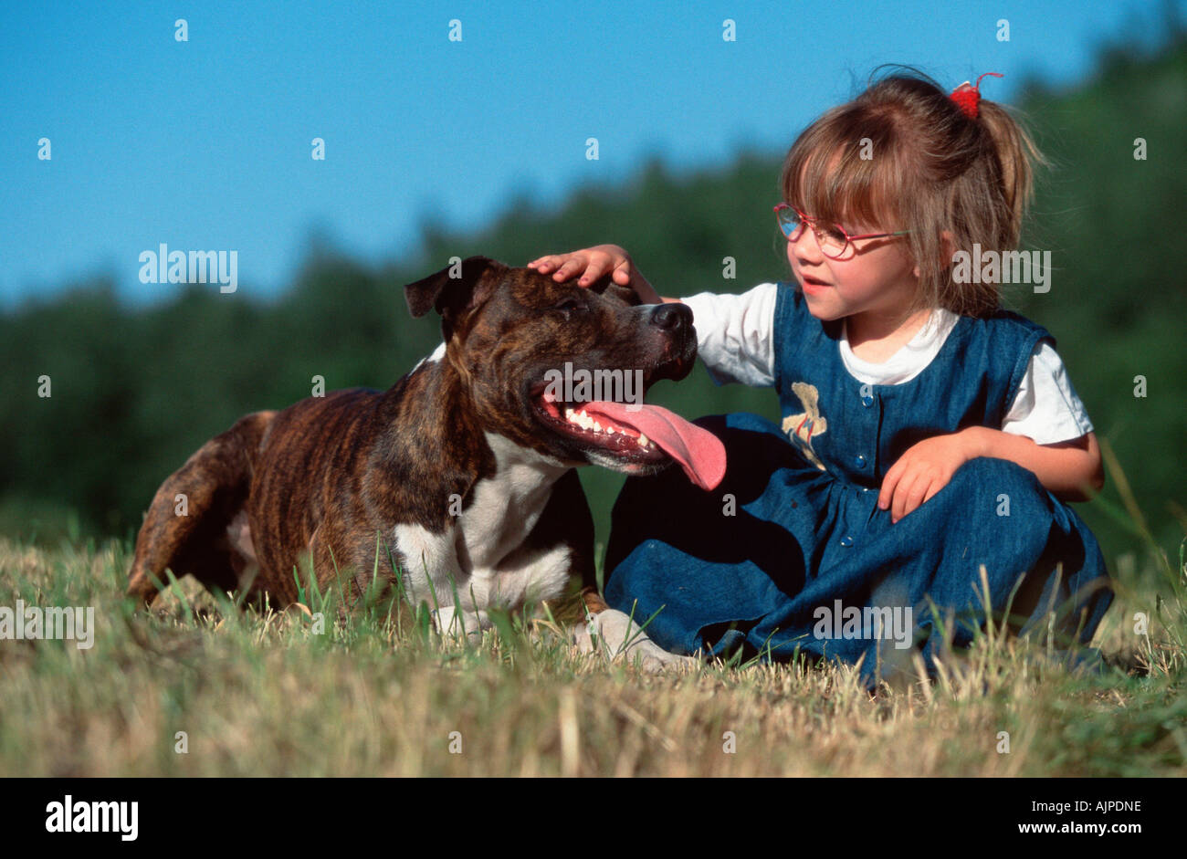 girl with american staffordshire terrier pitbull stock photo