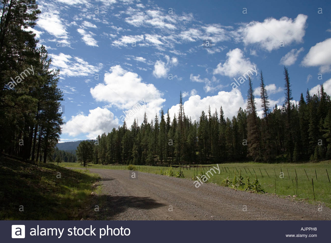 Scene along forest road 26 beaver creek apache fnational orest Arizona - Stock Image