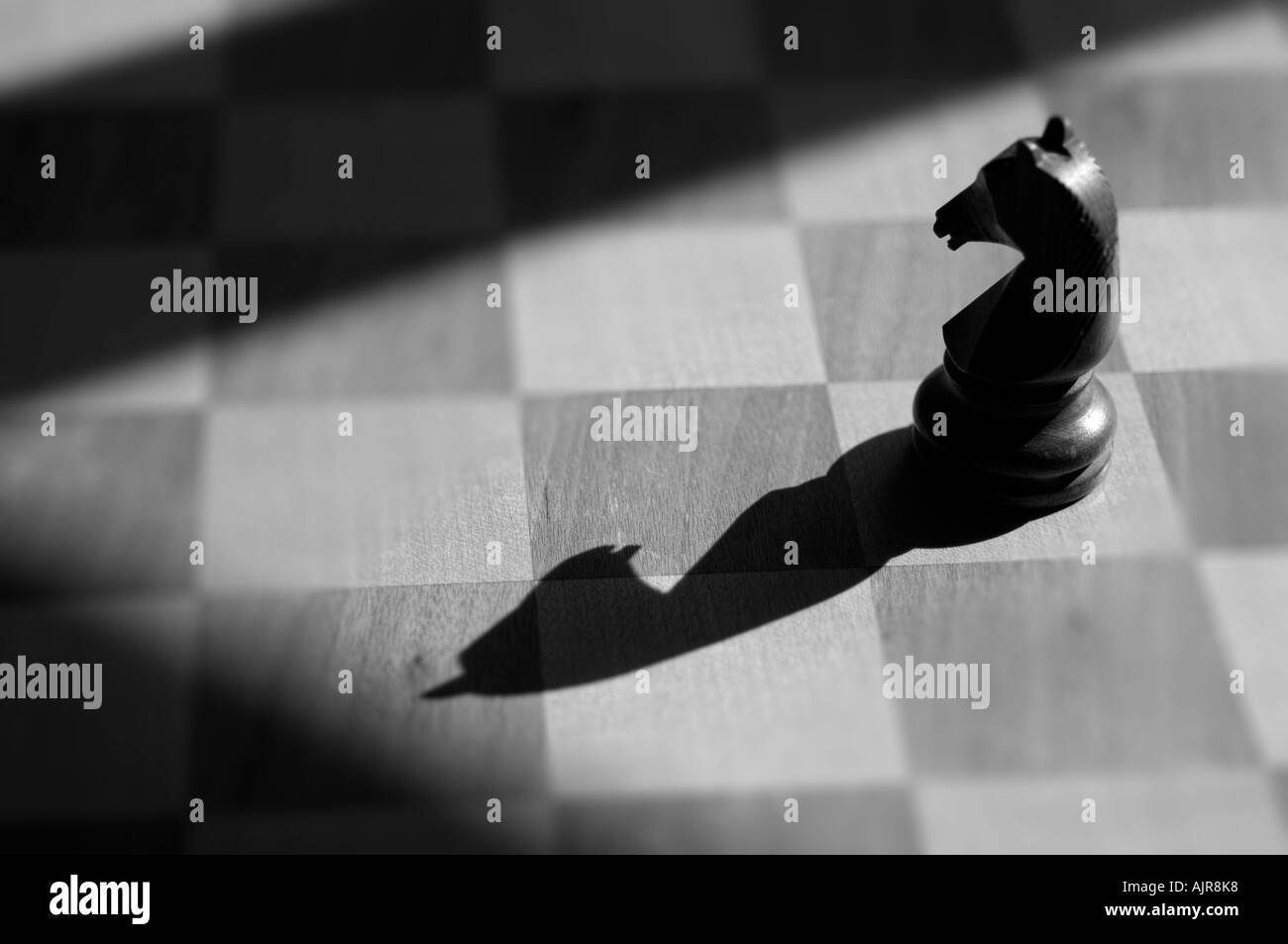 black knight lit dramatically on a chess board - Stock Image