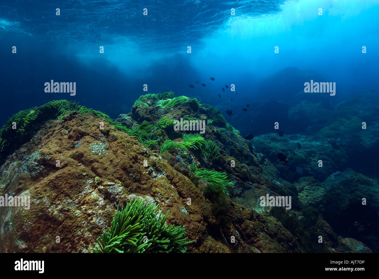 Underwater substrate St Peter and St Paul s rocks Brazil Atlantic Ocean - Stock Image