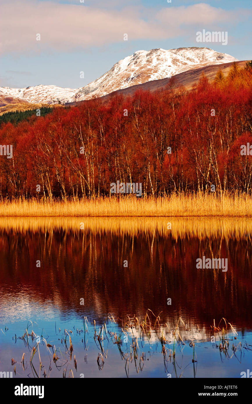 VIEW TO SNOW TOPPED BEN LOMOND IN THE TROSSACHS NATIONAL PARK NEAR GLASGOW FROM A LOCHEN AT LOCH LOMOND - Stock Image