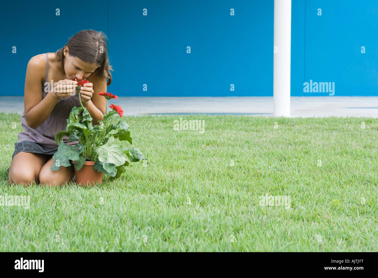 Young woman smelling gerbera daisy, kneeling on grass, full length - Stock Image