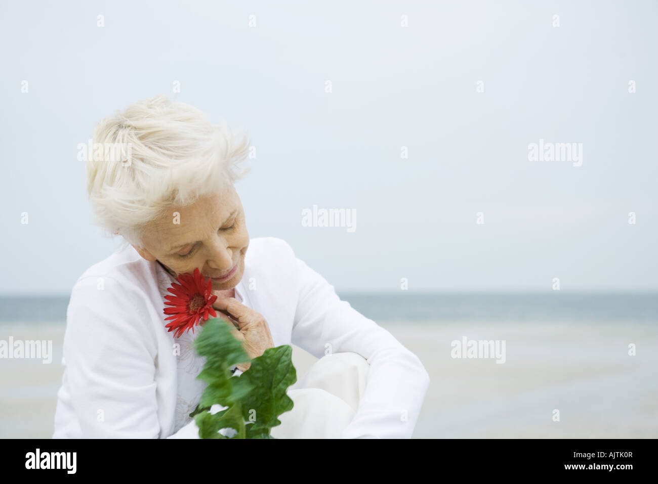 Senior woman holding up gerbera daisy to face, ocean in background, head and shoulders - Stock Image