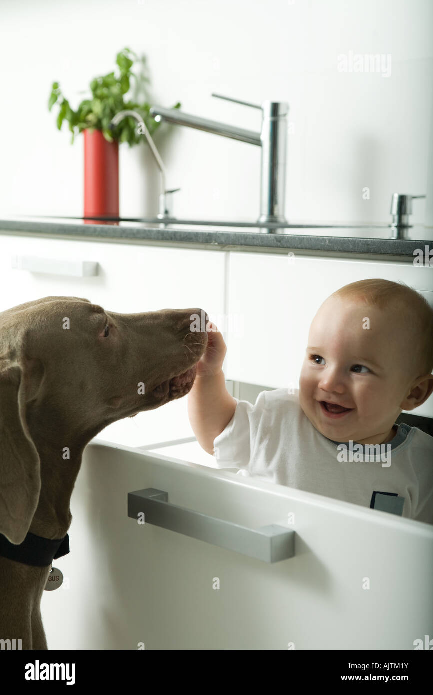 Baby in drawer smiling as dog sniffs baby's hand - Stock Image