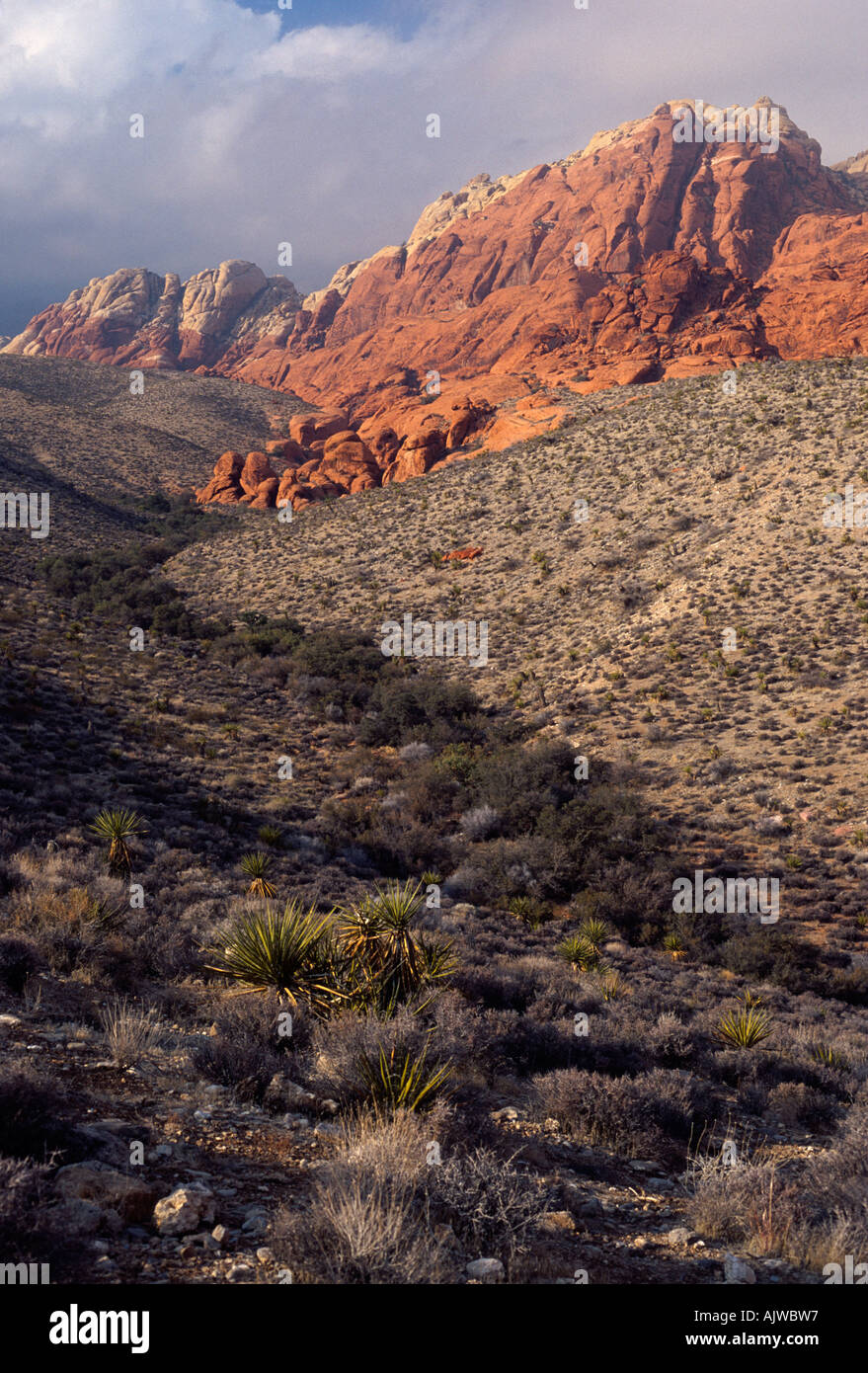 Mojave Desert ravine with red sandstone and gray limestone formations, Red Rock Canyon National Conservation Area, - Stock Image