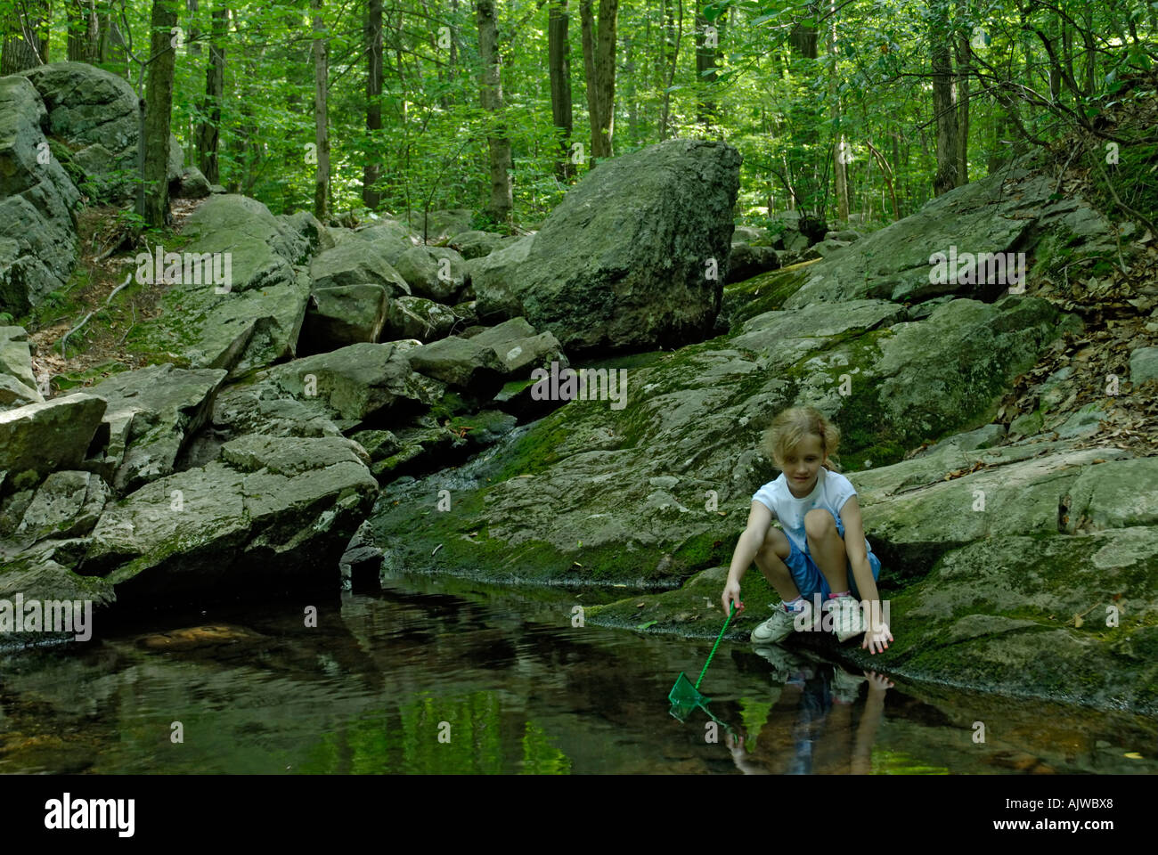 Young girl with net looking to catch frogs or fish in a stream in the woods - Stock Image