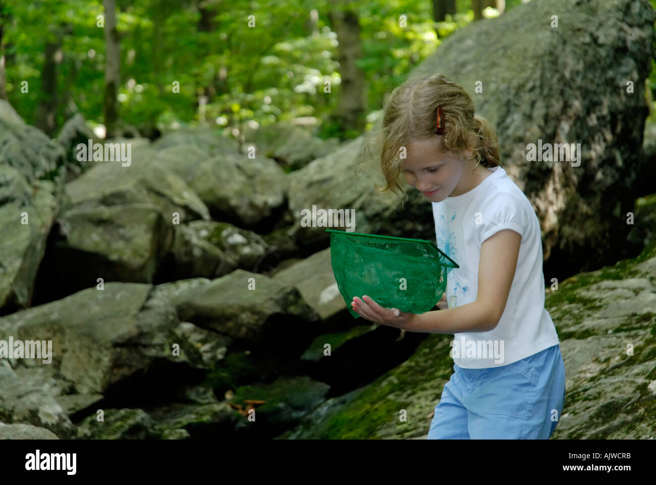 Young girl looking in net for aquatic animals at a stream - Stock Image