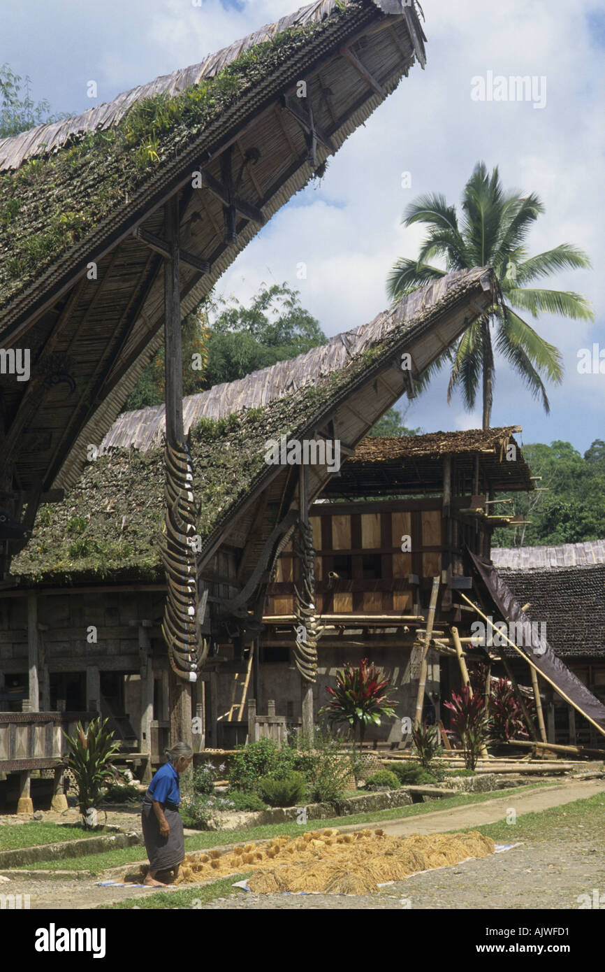 Indonesia Sulawesi toraja houses - Stock Image