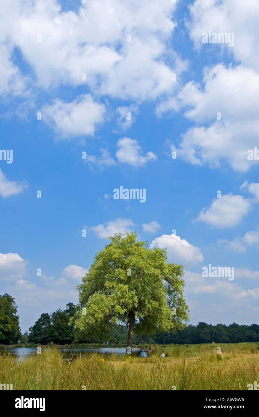 Vertical wide angle landscape of the view across Pen Ponds in Richmond Park on a sunny day. - Stock Image