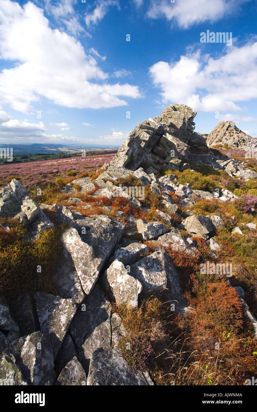 Stiperstones with purple heather on summer day blue sky sunshine near Bishops Castle in Shropshire Borders England UK - Stock Image
