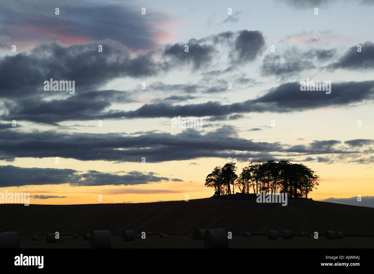 Roundel of trees near Aberlemno, Angus, Scotland, UK - Stock Image