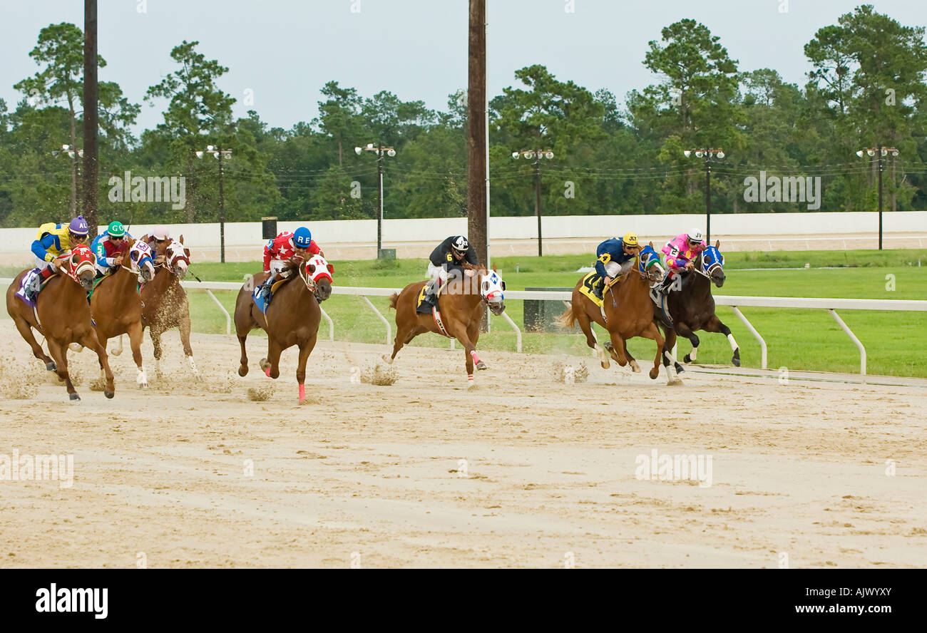 Race for the Finish Horse Race - Stock Image