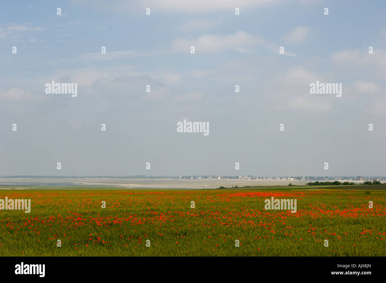 Somme Poppies in Picardy France Stock Photo