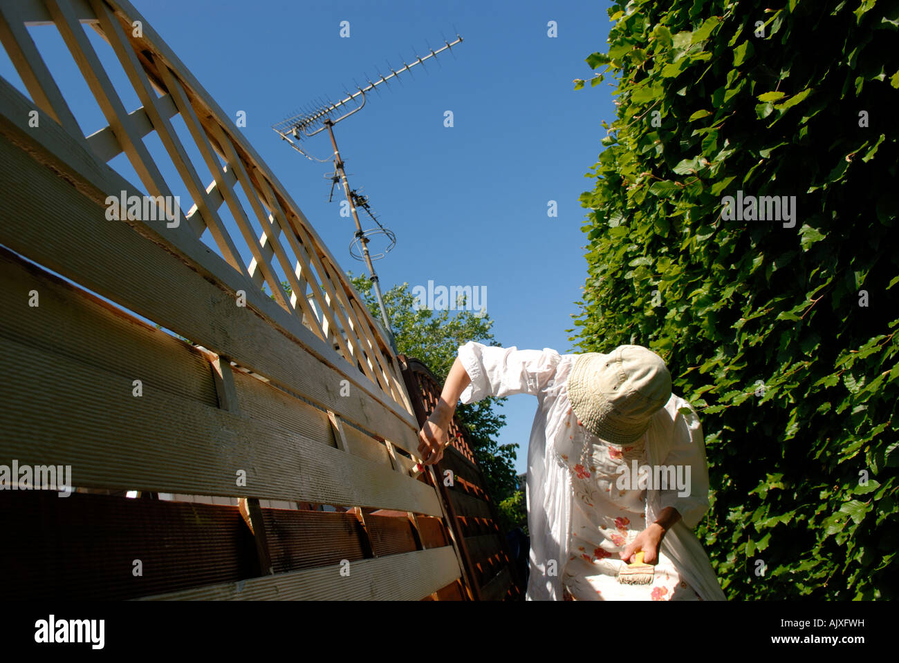 PAINTING THE FENCE - Stock Image