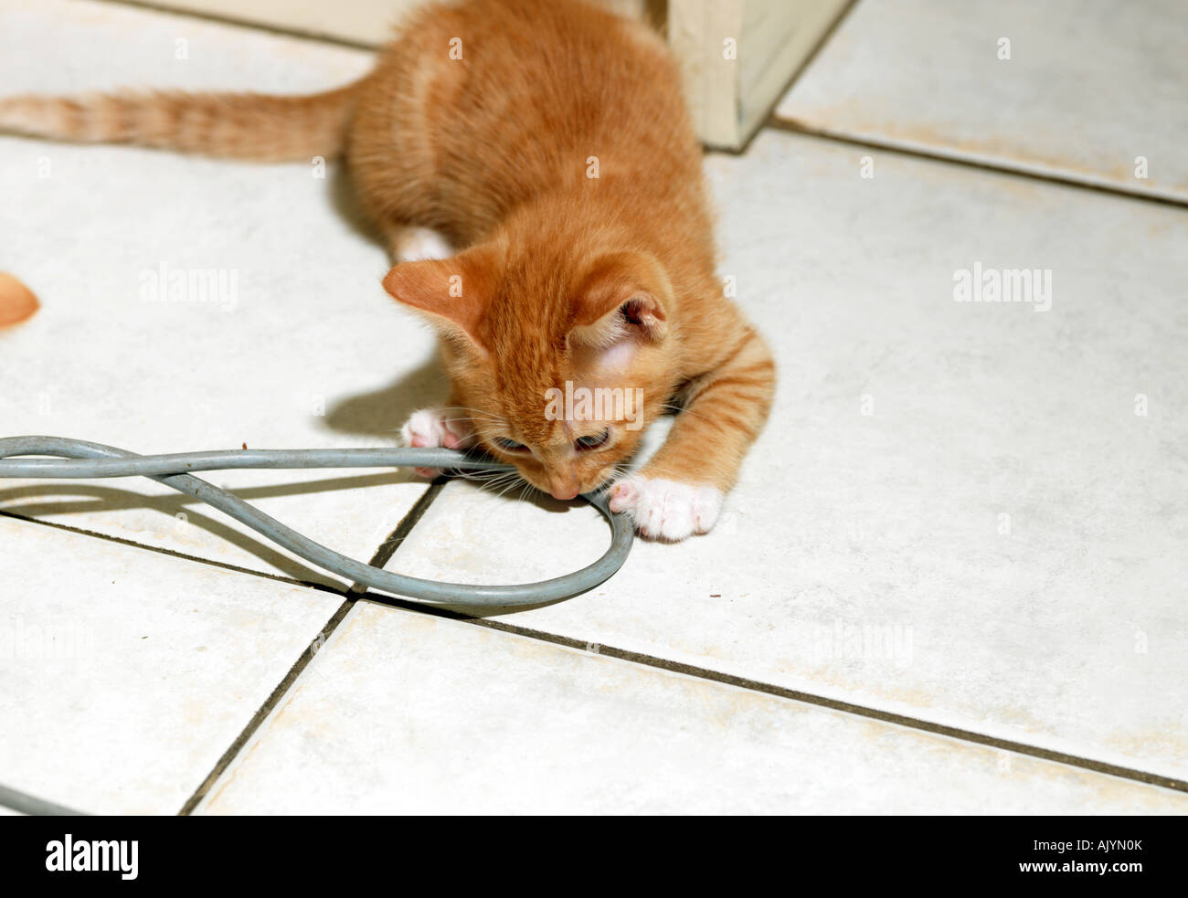 Kitten Biting and Electrical Wire Stock Photo: 14837202 - Alamy