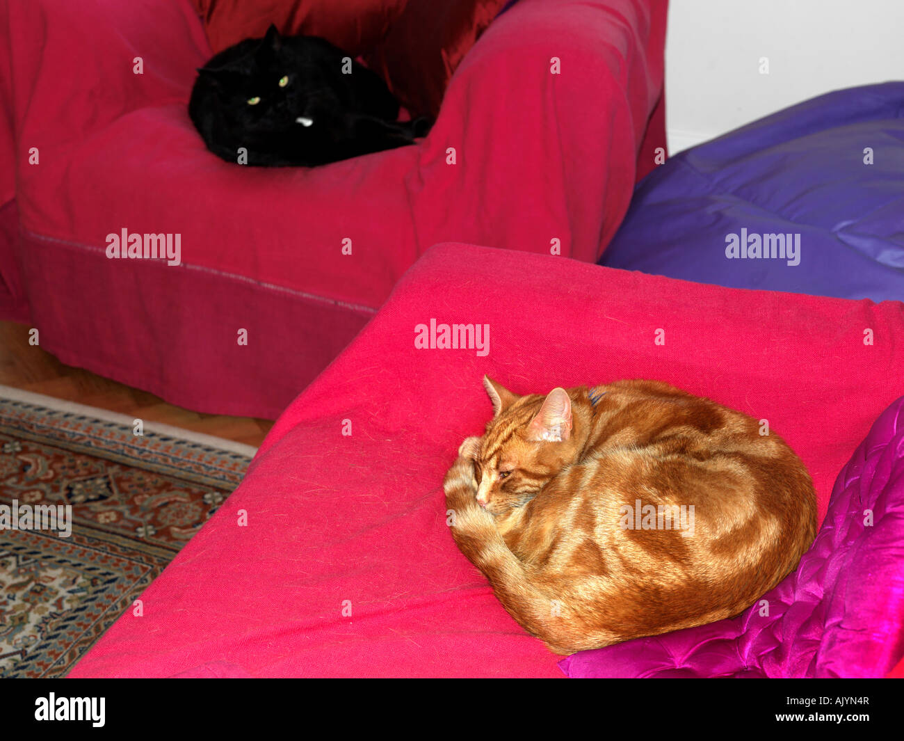 Two Cats Asleep on Different Chairs in the Lounge - Stock Image