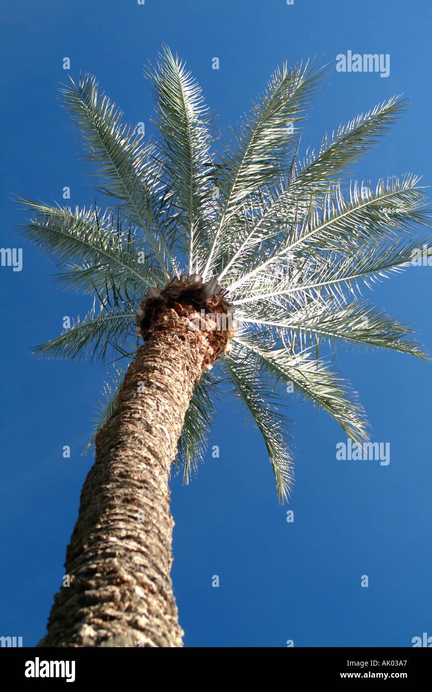 Dating Scottsdale AZ