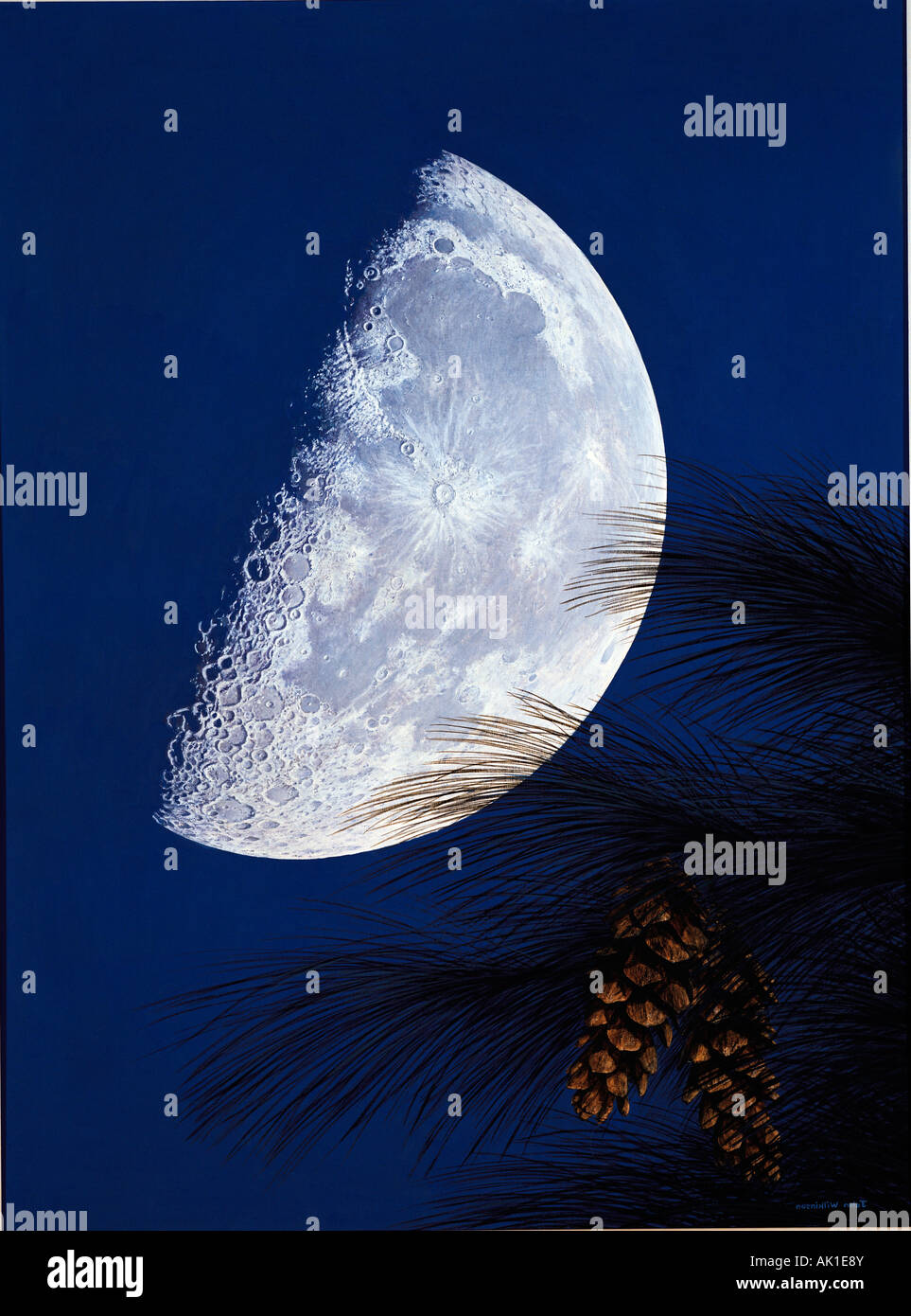 Illustration of half Moon with Pine tree cones. - Stock Image