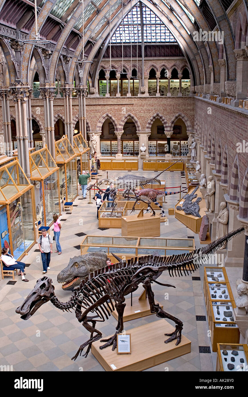 Interior of the University Natural History Museum in Oxford England - Stock Image