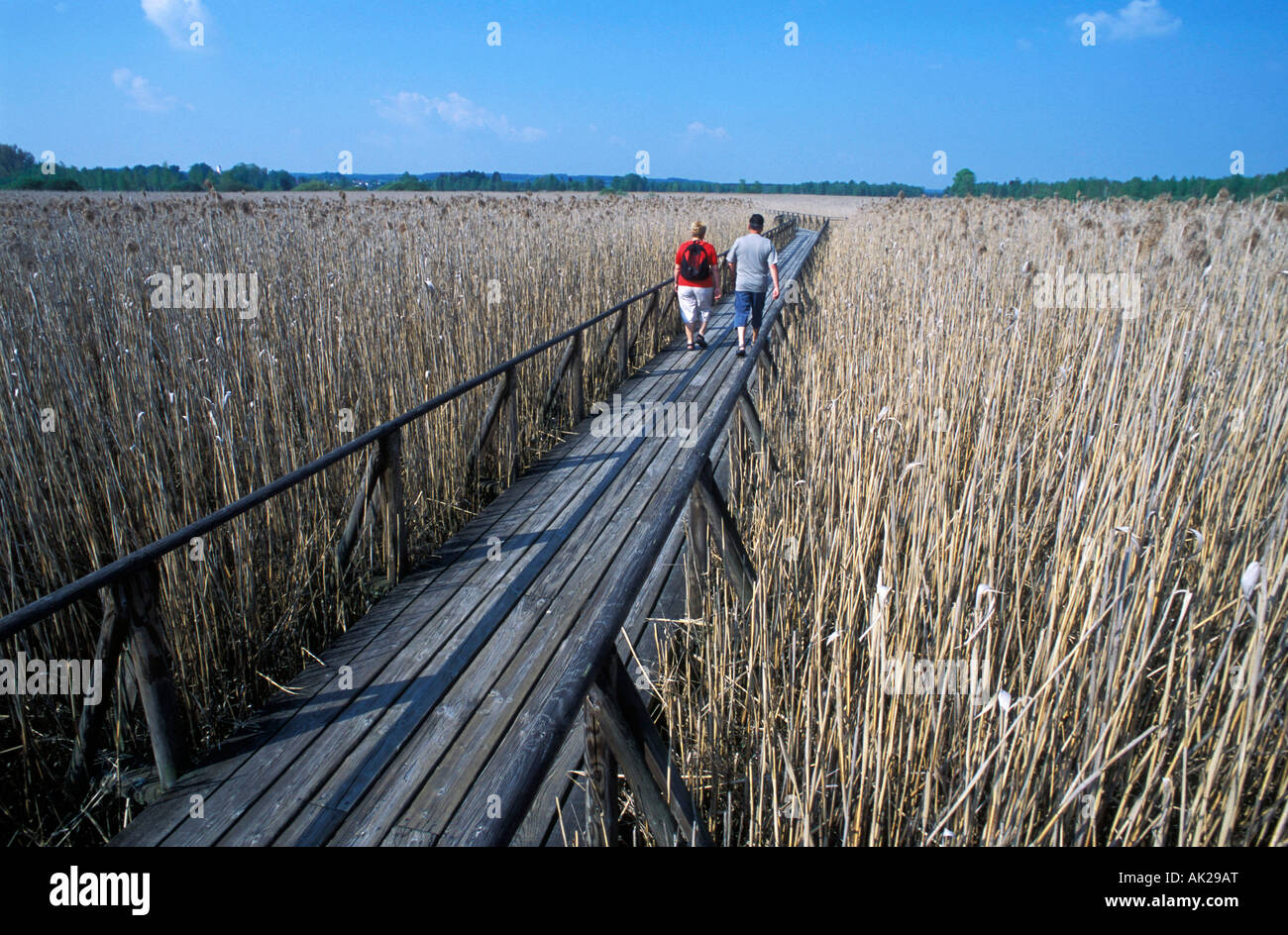 Footbridge, Lake Federsee Stock Photo