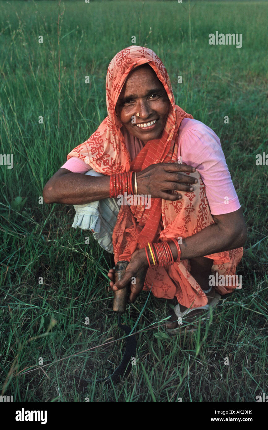 Indian woman in a colourful sari cutting with a sickle Madhya Pradesh India - Stock Image