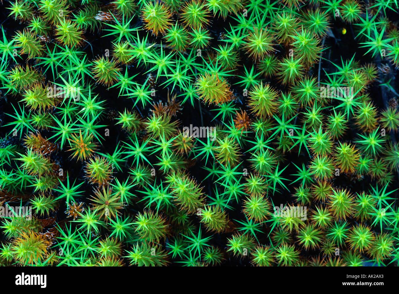 Green asterisks - Stock Image